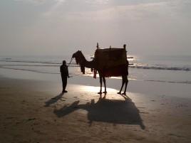 утренний верблюд