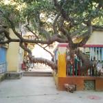 Как найти дерево желаний в Пури.
