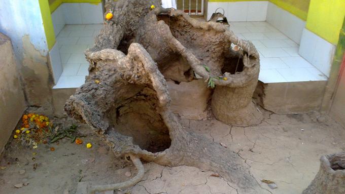 основание и ствол дерева
