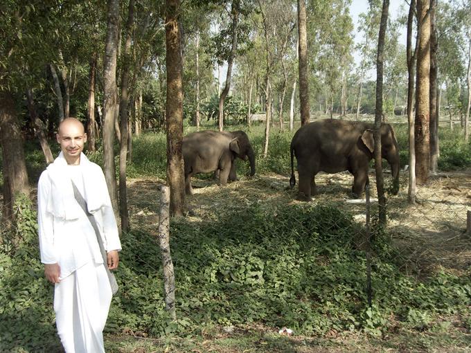 Слоны ИСККОН