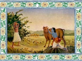 Пастух бросает топором в корову.