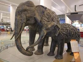 Слоны в аэропорту Дели.