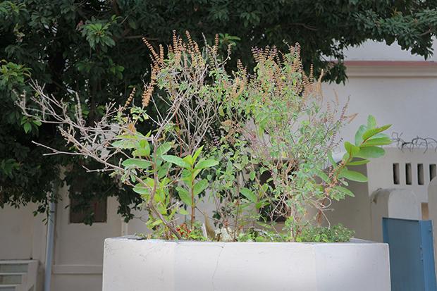 Выращивание дома туласи 64