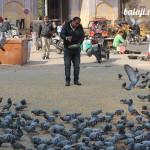 Путешествие по Раджастану: Джайпур.