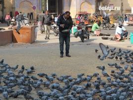 кормит голубей